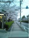 自宅前の道路